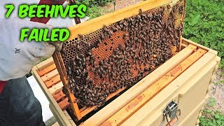 7 Beehives Failed - Beekeeping Vlog