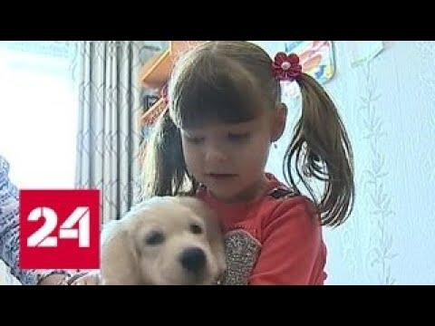 Владимир Путин исполнил мечту девочки-аутиста из Приморья и подарил ей собаку - Россия 24