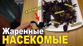 видео личинки тараканов