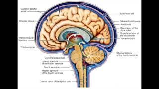 Neuroscience & Sleep: The Glymphatic System