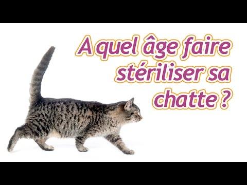 A Quel âge Faire Stériliser Sa Chatte ?