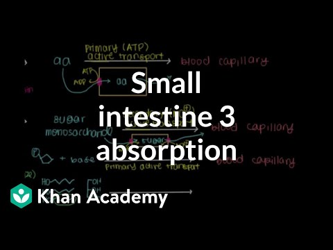 Small intestine 3: Absorption | Gastrointestinal system physiology | NCLEX-RN | Khan Academy