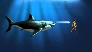 Un poisson fossile découvert en Chine serait l