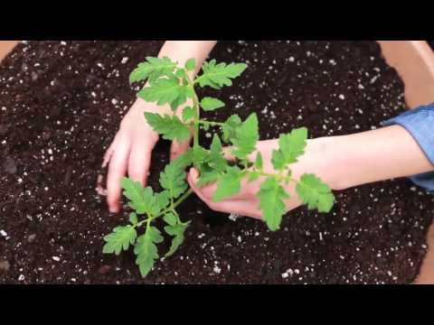 Quick Start Gardening Guide: Container Vegetable Gardening