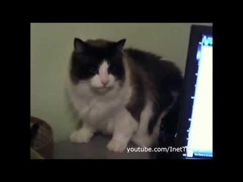 Кошки. Юмор. Фото. Смешные фотографии кошек