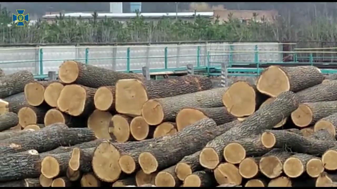 Без Купюр На Кіровоградщини СБУ блокувала масштабний експорт деревини. ФОТО. ВІДЕО Головне Кримінал  СБУ розтрата привласнення новини Кіровоградщина Кіровоград затримали 2021 Квітень