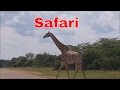 Travel Vlog | Trip To Johannesburg South African Safari Tour Vlog  | Family Vlog