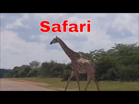 Travel Vlog | Safari in Johannesburg South Africa | Epic Trip To South Africa