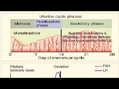 Missed Period? Amenorrhea Work up