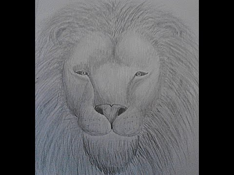 cum sa desenezi un leu pas cu pas - how to draw a lion step by step
