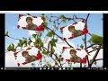 edius wedding song project free download_Aye Deewane Dil Kardi Kya Mushkil edius