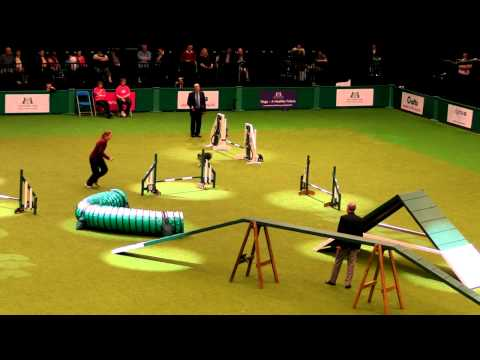 Crufts 2012: Agility Shelties