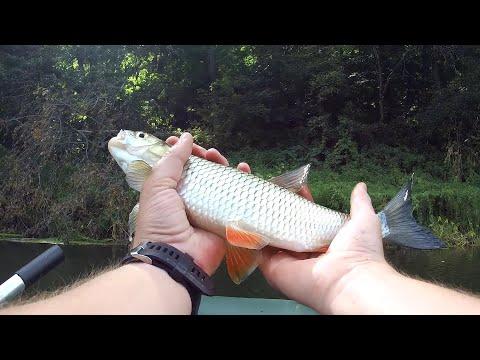 Голодная ЩУКА АТАКОВАЛА ГОЛАВЛЯ!!! Рыбалка на голавля осенью 2019