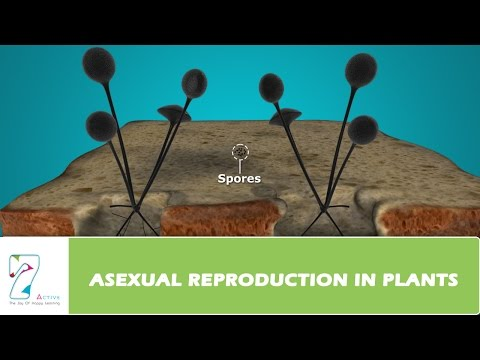 Asexual reproduction in plants quizlet psychology