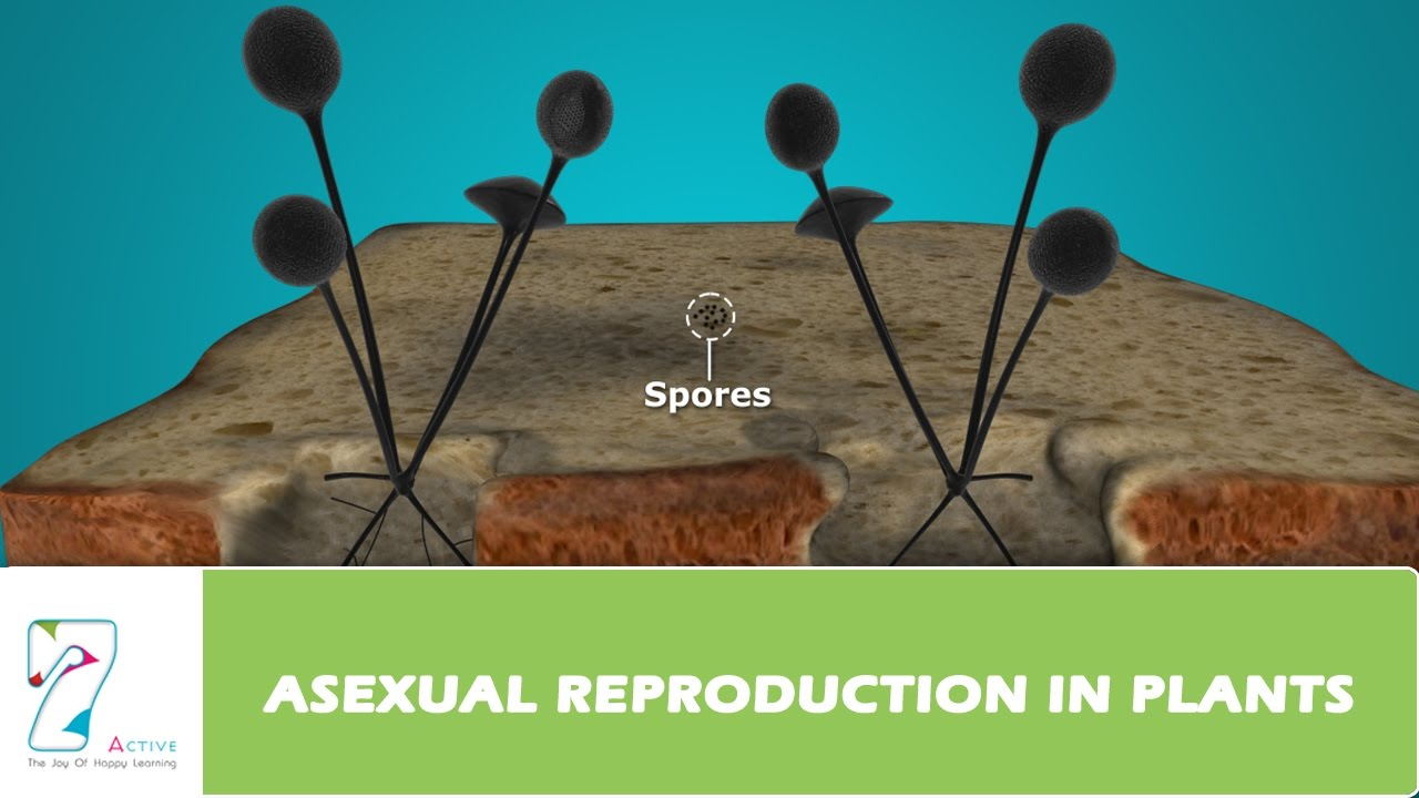 ASEXUAL REPRODUCTION IN PLANTS - YouTube