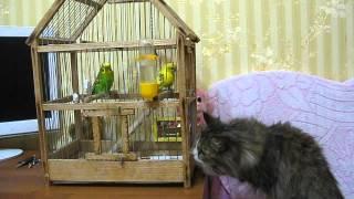 Кошка и попугаи