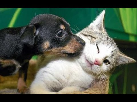 Thumbnail: Best Kittens and Puppies Compilation 2013 [NEW HD]