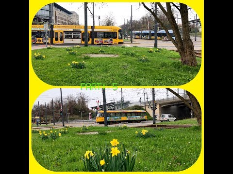 Dresden and its tram / Germany, April 2017 / Part: 5