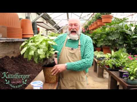 Kittelberger Florist & Gift's- Tip  On House Plants