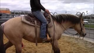 Demos western et Éthologique de Easy Horse à Rennes