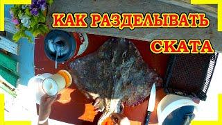 КАК РАЗДЕЛЫВАТЬ СКАТА морская лиса рыбалка рыбалка2020 скат