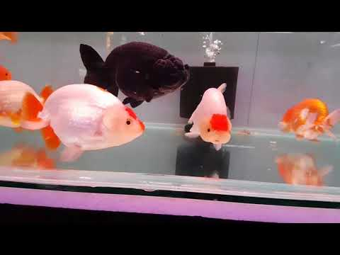Wednesday Afternoon at Chatuchak Market, Bangkok, Thailand - Fish and aquarium pets