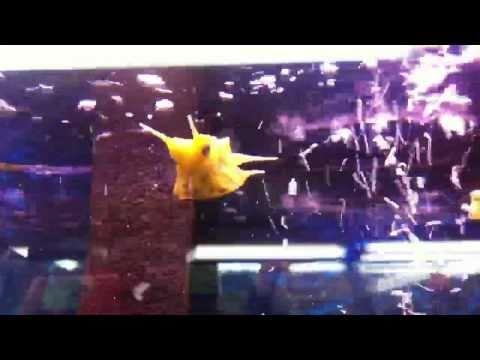Ultra Weird Species Of Fish W/ Babies!!! [HD]