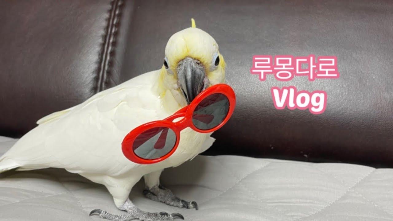 [루이&몽몽&다정&로미] 앵무새 브이로그(3) Parrot Vlog