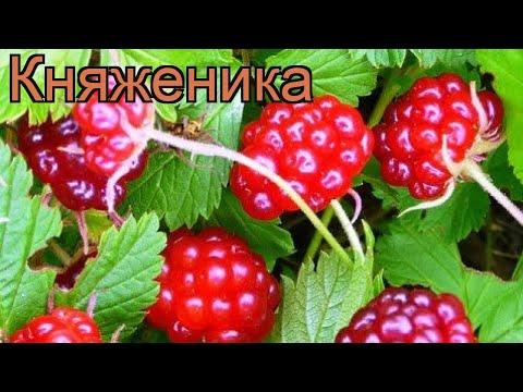 Вопрос: Костяника и княженика – это одна и та же ягода или нет В чем отличие?