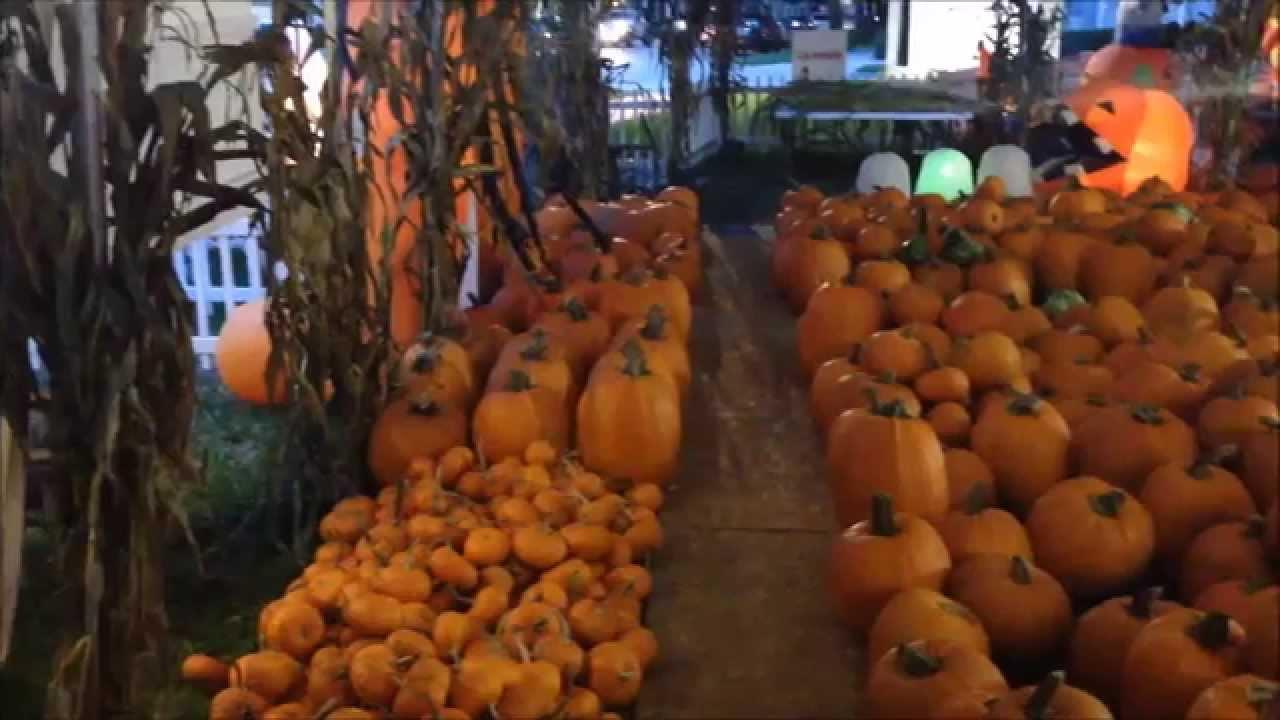 Fall Pumpkin Wallpaper Worlds Largest Pumpkin Patch For Halloween In Celebration