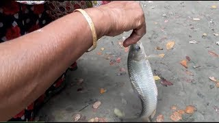 Village girls Catch fish using fishing hook | Traditional fishing in the village #4