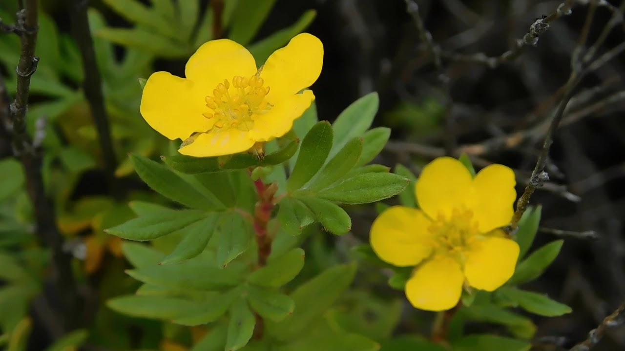 Beautiful Small Yellow Flowers Free Stock Creative Commons Video