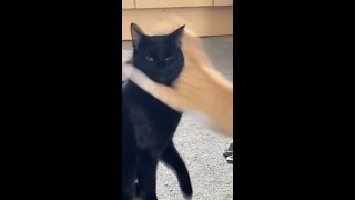 Funny Cats Fighting  Cat Fight Compilation