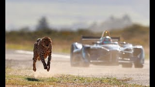 Video Drag Race: Formula E Car vs Cheetah download MP3, 3GP, MP4, WEBM, AVI, FLV November 2019
