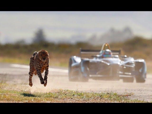 Formula E Electric Race Car Vs Actual Cheetah See Who Wins In A Inverse