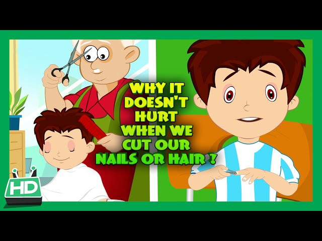 Why It Does Not Hurt When We Cut our Nails or Hair?