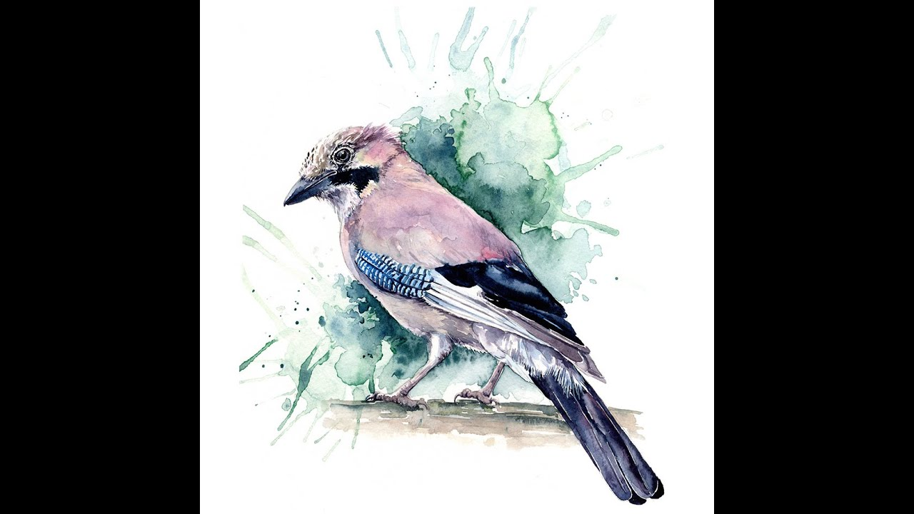 Watercolour Jay tutorial from facebook Live