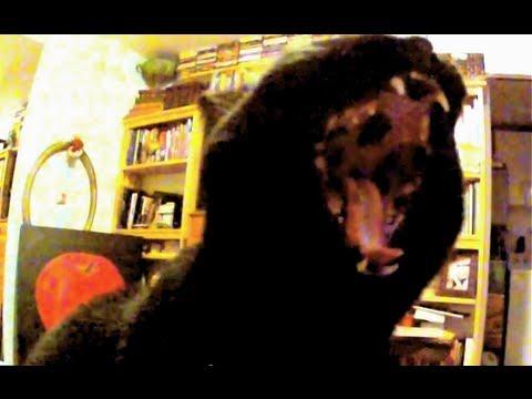 Black Cat Yawn