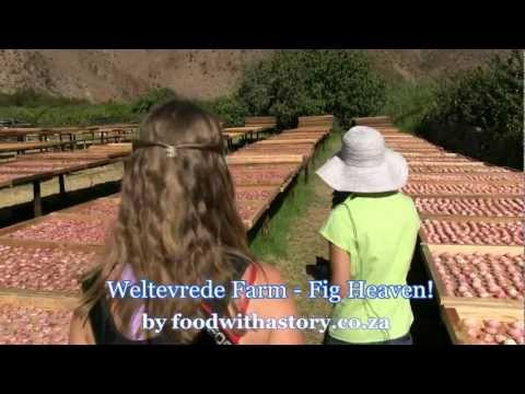 Weltevrede Farm - Fig heaven in the Karoo