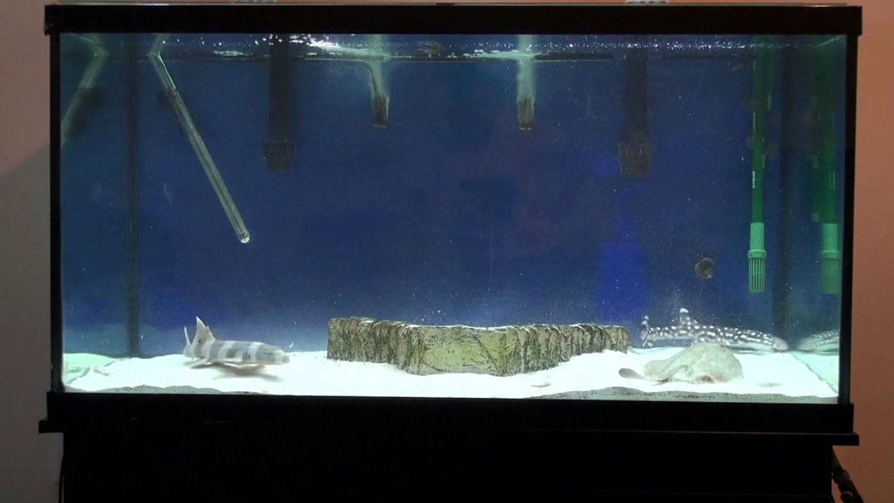 Shark And Stingray Grow Out Aquarium Youtube