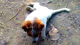 Gambar cover Dog with broken legs gets new life Loves To Run Now | Puppies Rescued