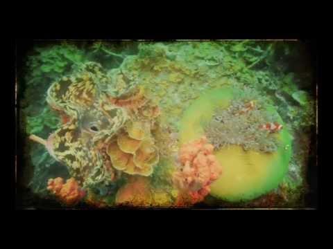 LOREN LEGARDA: Philippine Marine Biodiversity Documentary