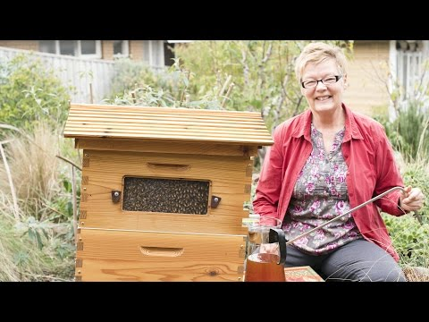 Inspired honey harvesting from the Pacific Islands to the Great Ocean Road (Video)