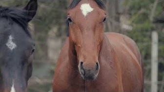 Horsecare and management studies at Salpaus Further Education, Lahti Jokimaa