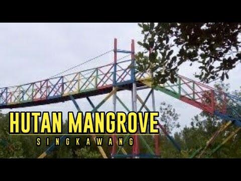 berwisata-di-hutan-mangrove-singkawang