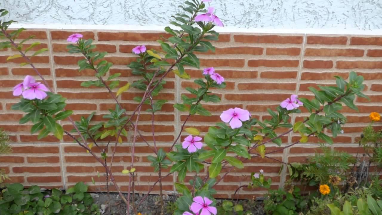 curar con hierbas de próstata