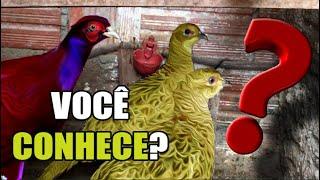 Adquiri uma ave DIFERENTE | REALIZEI UM SONHO!