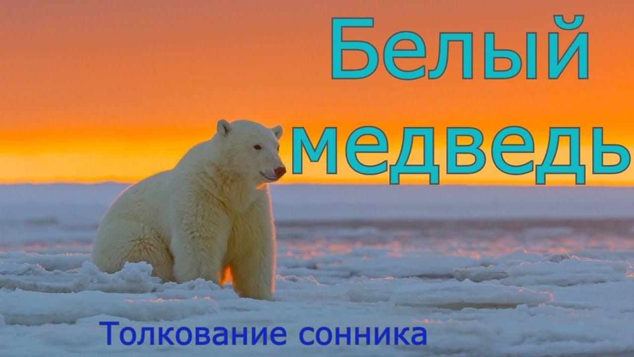 Белый медведь - толкование сонника