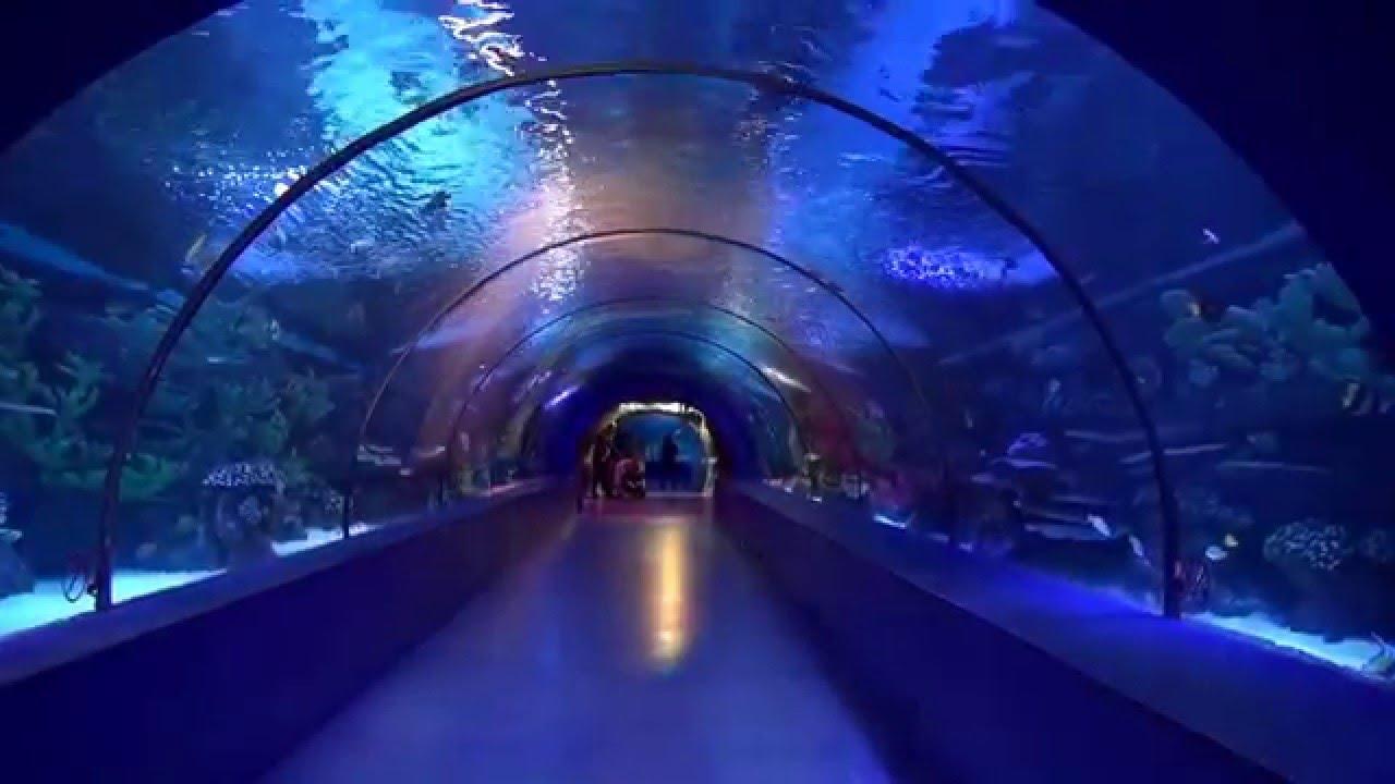 Antalya Aquarium The World S Biggest Tunnel Aquarium