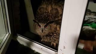 Угу! Это Ночной Дожор! Просто отдай еду сове и отойди.